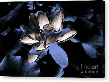 Lotus By Night Canvas Print