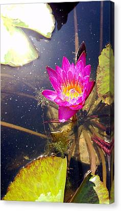 Lotus Day Canvas Print