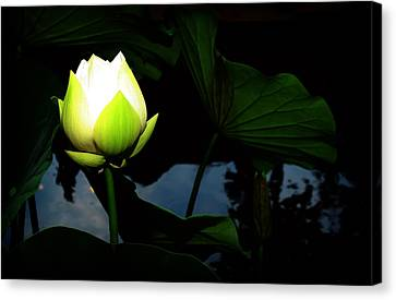 Lotus Flower 2 Canvas Print