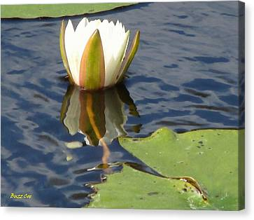 Lotus Flower Canvas Print by Buzz  Coe