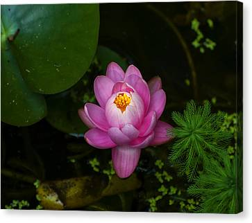 Flowers Names Canvas Print - Lotus Flower by Chris Flees