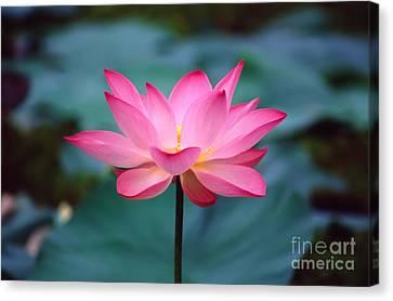 Lotus Flower Canvas Print by George Atsametakis