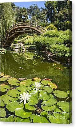 Lotus Garden - Japanese Garden At The Huntington Library. Canvas Print by Jamie Pham