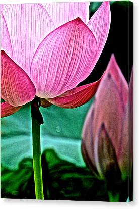 Lotus Heaven - 128 Canvas Print
