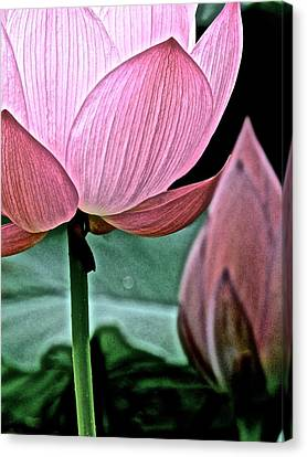 Lotus Heaven - 129 Canvas Print