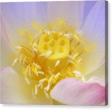 Lotus In Side Canvas Print by Lila Shravani