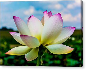 Lotus Canvas Print by Jon Woodhams