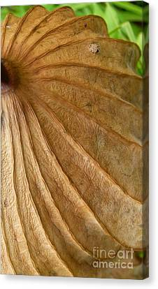 Canvas Print featuring the photograph Lotus Leaf by Jane Ford