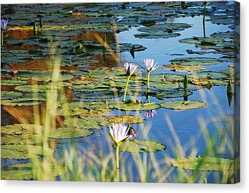 Canvas Print featuring the photograph Lotus-lily Pond 2 by Ankya Klay
