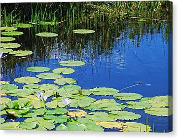 Canvas Print featuring the photograph Lotus-lily Pond by Ankya Klay