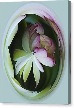 Lotus Mirror Canvas Print by Jean Noren