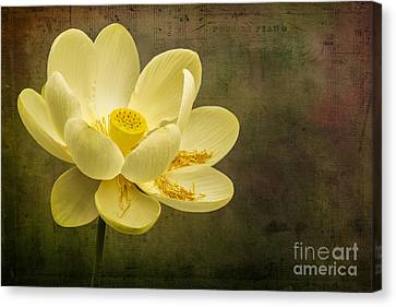 Canvas Print featuring the photograph Lotus Notes by Vicki DeVico
