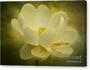 Canvas Print featuring the photograph Lotus by Vicki DeVico