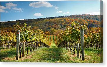 Pastoral Vineyard Canvas Print - Loudon County Vineyard I by Steven Ainsworth