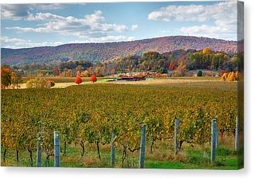 Pastoral Vineyard Canvas Print - Loudon County Vineyard II by Steven Ainsworth