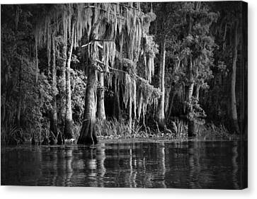 Louisiana Bayou Canvas Print by Mountain Dreams