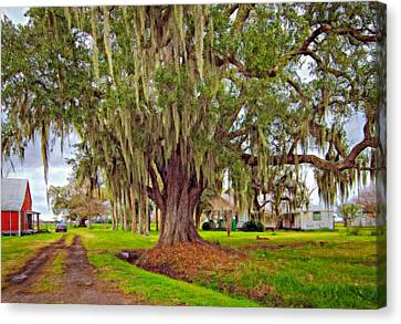 Louisiana Country Oil Canvas Print by Steve Harrington