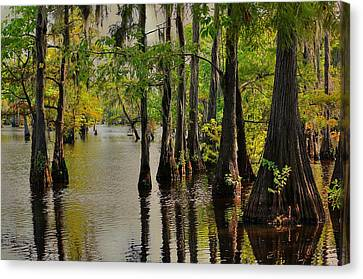 Louisiana Cypress Swamp Canvas Print by Ester  Rogers