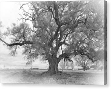 Louisiana Dreamin' Monochrome Canvas Print by Steve Harrington