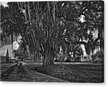 Louisiana Moon Rising Monochrome  Canvas Print by Steve Harrington