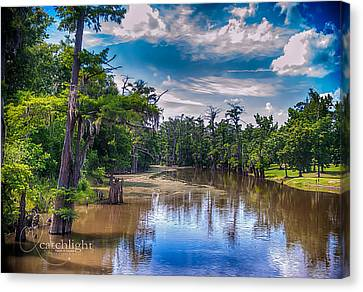Louisiana Swamp Canvas Print by Tammy Smith