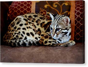 Lounging Leopard Canvas Print