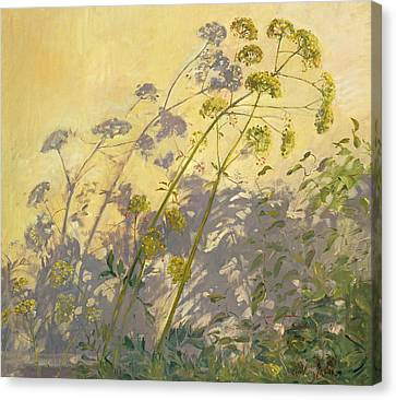 Lovage Clematis And Shadows Canvas Print by Timothy  Easton