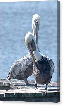 Love At First Site Canvas Print by Nancy Edwards