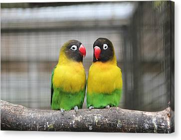 Canvas Print - Love Birds by Kerry Lapcevich