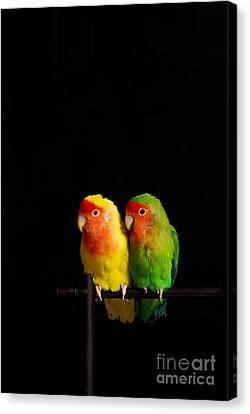 Love Birds Canvas Print by Syed Aqueel
