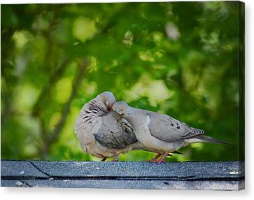 Love Doves  Canvas Print by Terry DeLuco