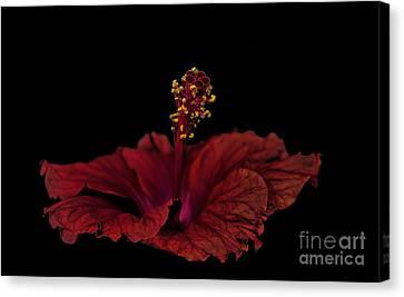 Canvas Print featuring the photograph Love Flower by Marija Djedovic