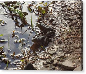 Canvas Print featuring the photograph Love Frogs by Michael Porchik