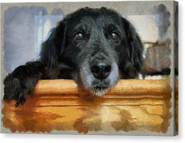 Love In A Puppy's Eyes Canvas Print by Paulette B Wright