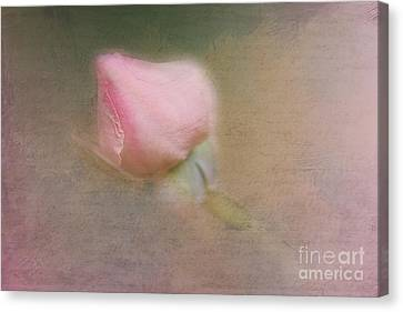 Love In Bloom  Canvas Print by A New Focus Photography