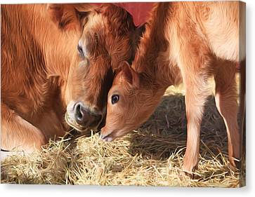 Cow Canvas Print - Love Is All You Need by Donna Kennedy