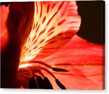 Love Is In Bloom Canvas Print by Tara Miller