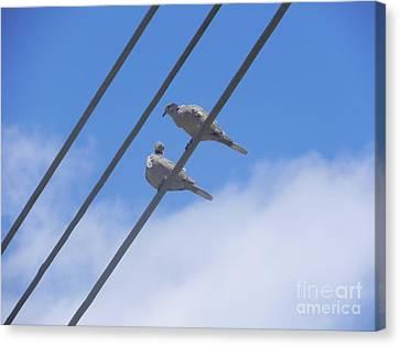 Love Is In The Air Canvas Print by Chrisann Ellis