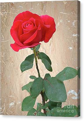 Love Is Like A Red Red Rose Canvas Print by Janette Boyd