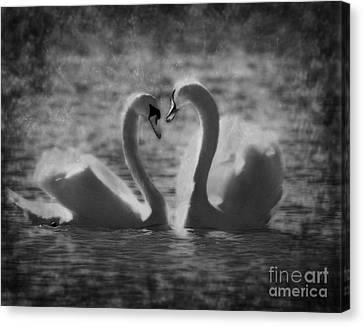 Love Is.. Canvas Print by Nina Stavlund