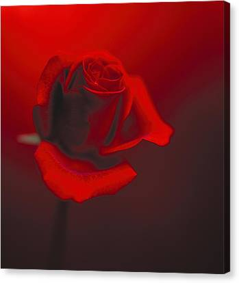 Canvas Print featuring the photograph Love by Lana Enderle