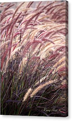 Love Purple Fountain Grass Canvas Print by Penny Hunt