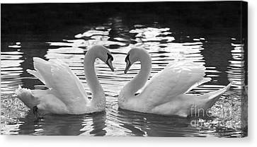 Love Swans Canvas Print by Brandon Alms
