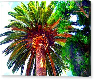 Love Under The Palm In San Diego Canvas Print by Angela Annas