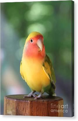 Lovebird On A Pedestal Canvas Print by  Andrea Lazar