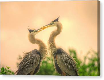 Canvas Print featuring the photograph Lovebirds  by Dennis Baswell