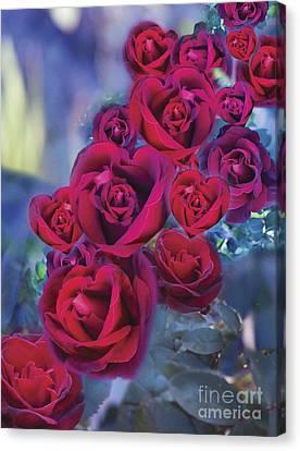 Loveflower Roses Canvas Print by Alixandra Mullins