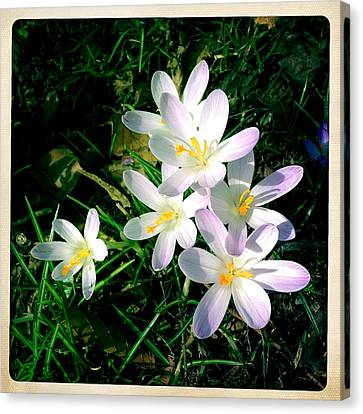Lovely Flowers In Spring Canvas Print
