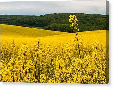 Lovely Hills Canvas Print by Davorin Mance