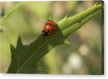 Lovely Lady Bug Canvas Print by Shelly Gunderson